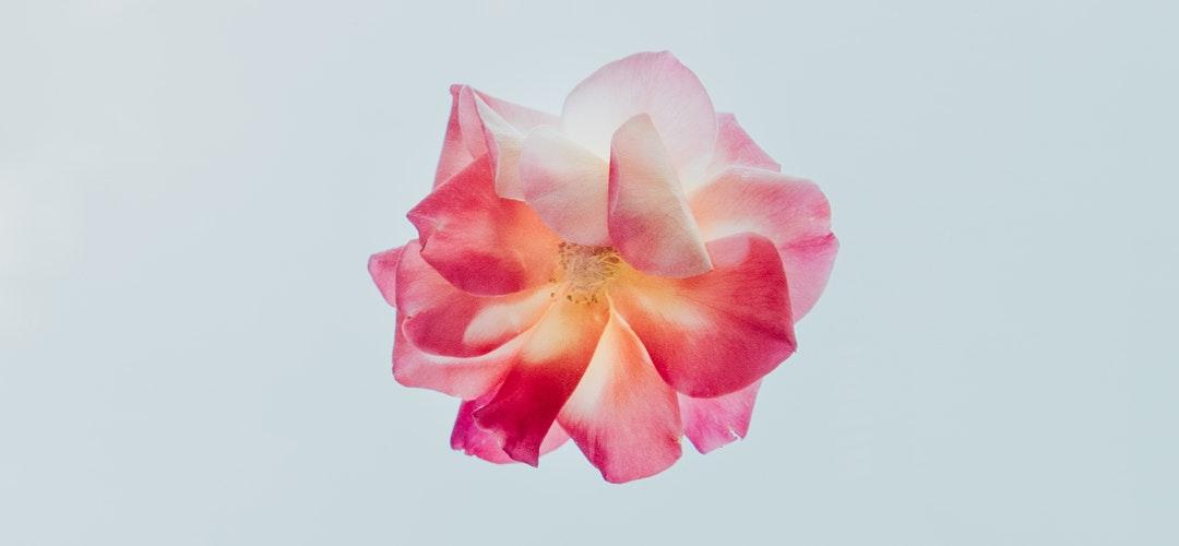 Tips Memilih Bunga Segar