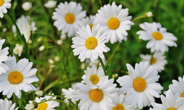 Cara Merawat Bunga Agar Subur