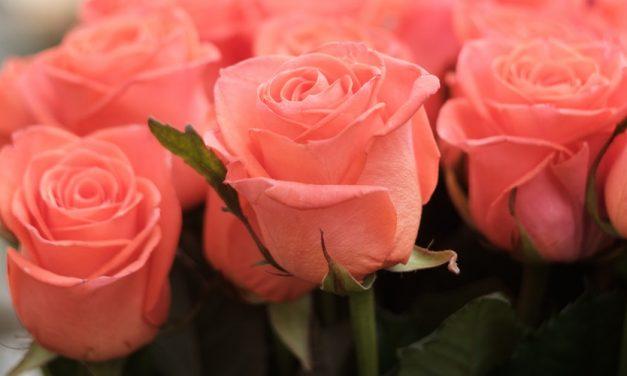 Pengertian Standing Flower dan Contohnya