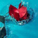 Karakteristik dari Bunga Angelonia